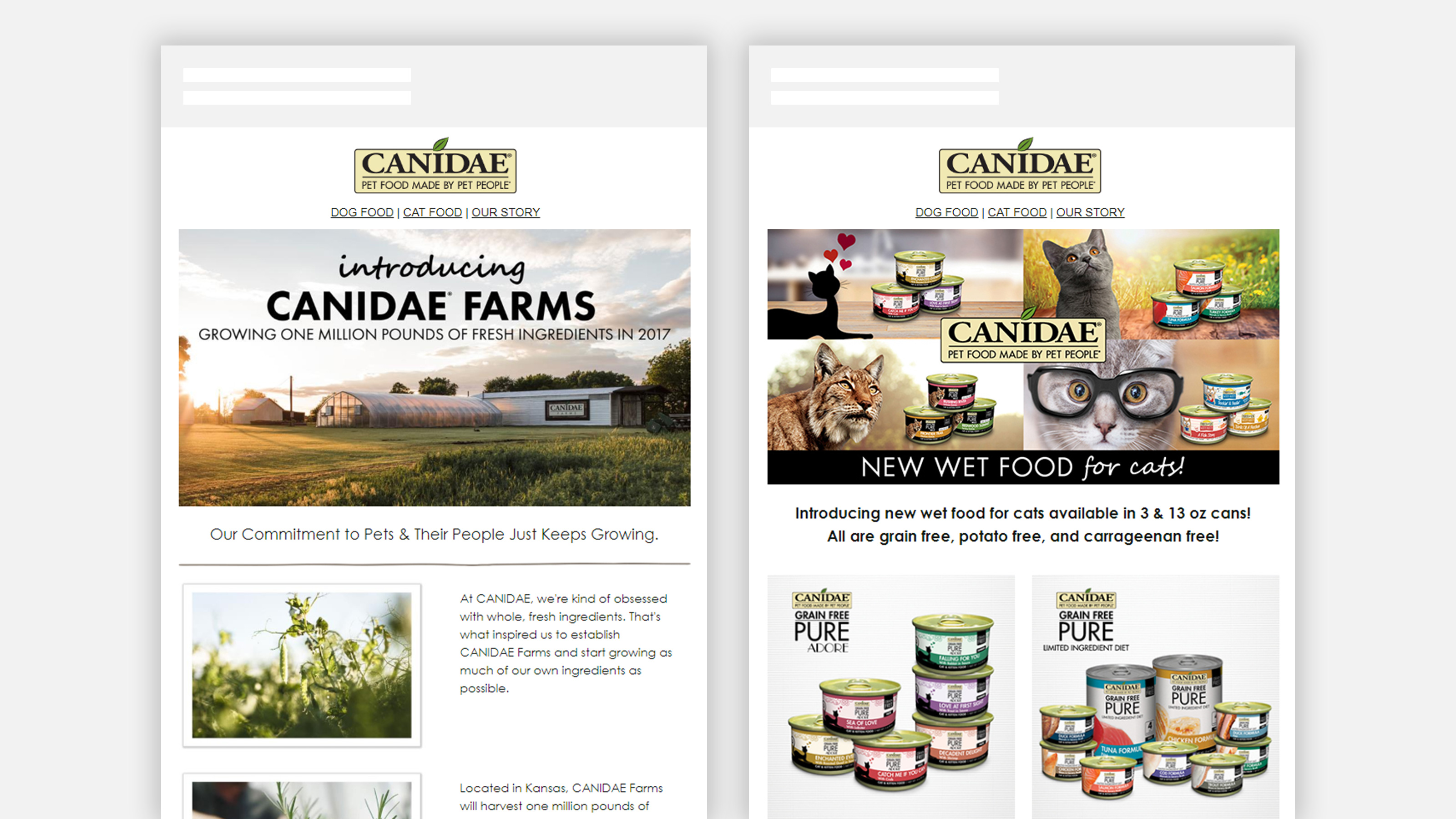 CANIDAE Pet Food newsletter emails