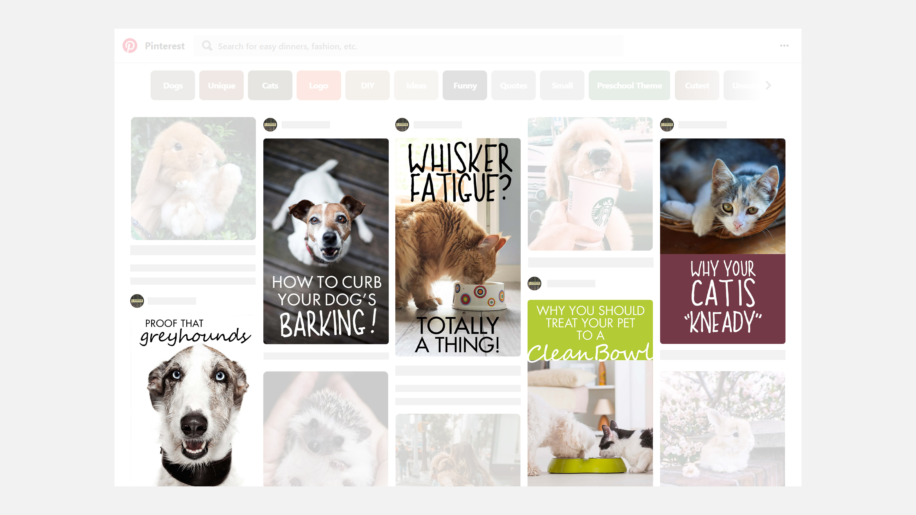 CANIDAE Pet Food Pinterest image examples